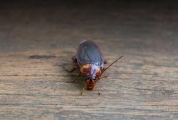 В воронежской больнице, которую посетила Летучая, обнаружили тараканов