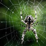 Ученые узнали, почему люди боятся пауков и змей