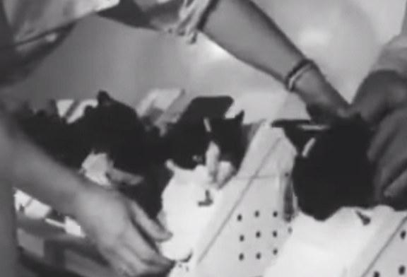 Единственной кошке-космонавту планируется поставить бронзовый памятник во Франции