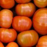 Новак объявил дату отмены ограничений для Турции на поставку томатов