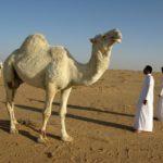 Саудиты собрались конфисковать до $800 млрд у заподозренных в коррупции принцев