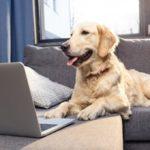 Не хуже «Фейсбука»: как животные создают свои социальные сети