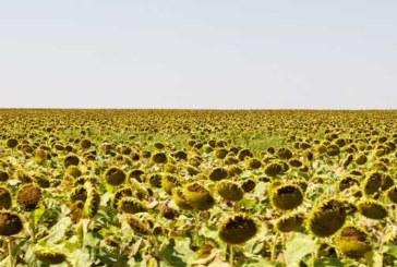 На Украине продлили мораторий на продажу сельхозземель