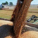 Россия сохранит лидерство по экспорту пшеницы в 2017 году, считают в РЭЦ