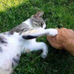 Зоологи: кошки бывают левшами, и это влияет на их характер