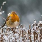 Для певчих птиц воспитание оказалось важнее генов
