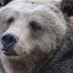 Полиция проводит проверку сообщений об обнаружении в Самаре медведей
