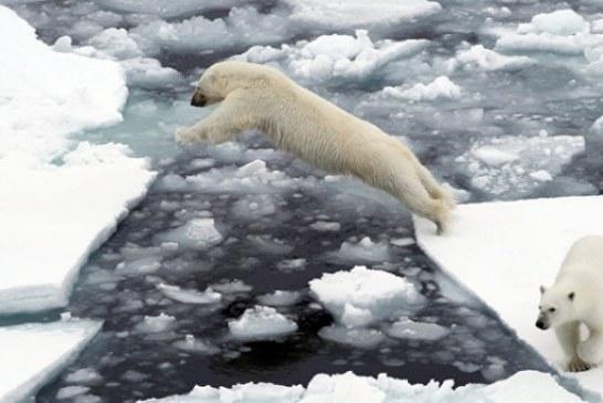 НАСА: площадь льдов в Арктике достигла рекордно низких значений