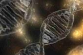 Ученые нашли сотни «генов интеллекта»