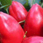 Сибирские ученые вывели витаминный перец «Египетская сила»