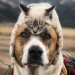 Лишнего не спросит: как кот и пес подружились и прославились