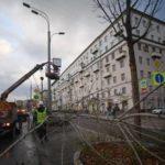 Ураган повалил в Москве более тысячи деревьев