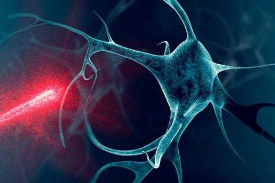 «Горячие точки». Зачем ученые измеряют температуру живой клетки