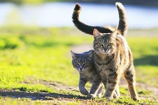 Польза котов для здоровья. Что говорит наука?