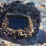Невероятное путешествие потерянного в море фотоаппарата