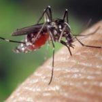 В Воронеже нашли объяснение нашествию комаров