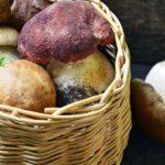 Хитин, тяжелые металлы, радионуклиды: почему диетологи не жалуют грибы