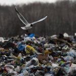 В Наро-Фоминске оценили экологический ущерб от незаконной свалки
