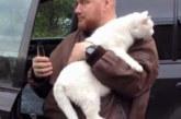 Британский кот-автостопщик застрял за радиатором и проехал 128 км, но выжил