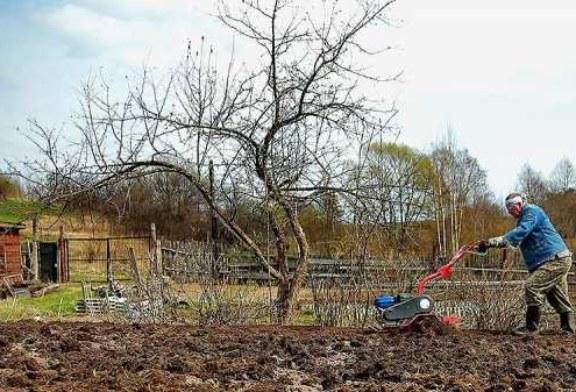 В Гидрометцентре сообщили о сроках окончания дачного сезона