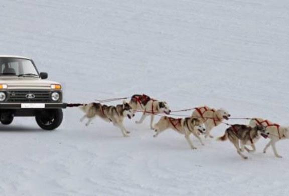Интернет взорвал ролик c «Нивой» в собачьей упряжке