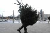 Россияне начали скупать новогодние елки уже в ноябре