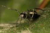 Коричневый жир поможет похудеть, млекопитающие пауки и реальная история Содома и Гоморры