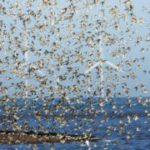 Бельгия тратит сотни тысяч евро на защиту редких видов птиц. Во Франции их отстреливают