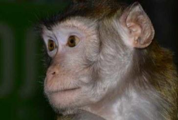 У обезьяны из контактного зоопарка проверят прививки после нападения на посетительницу