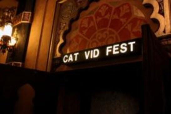 Есть такая работа — видео с котиками смотреть. И на этом можно заработать!