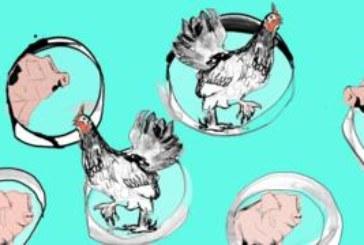 Мясо из лаборатории на наших тарелках: ближайшее будущее или мечта ученых?