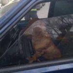 В Саратове пес за рулем устроил серьезное ДТП