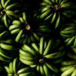 Мир останется без бананов? Смертельный для них грибок добрался до Америки
