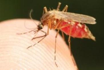 Мир может избавиться от малярии уже к 2050 году. Каким образом?