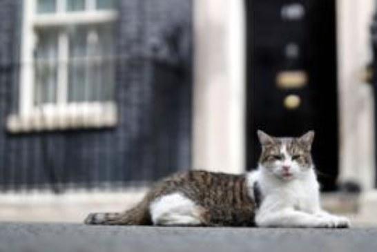 Зачем Британии новые выборы и что теперь будет с брекситом?