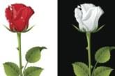 Чисто английское меню. Обед имени войны Алой и Белой розы