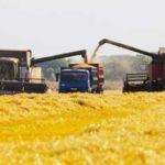 Кого Россия будет хлебом кормить в этом году — Свободная Пресса
