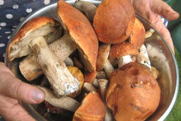 Отравление грибами: эксперт рассказал, что от него спасет