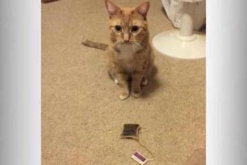 «Сломавший стереотипы» кот покорил пользователей соцсетей