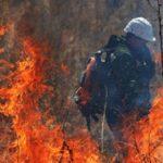 В Приамурье ввели режим ЧС из-за лесных пожаров