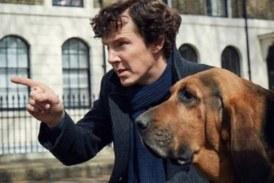 Бенедикту Камбербэтчу исполнилось 42: лучшие роли харизматичного британца