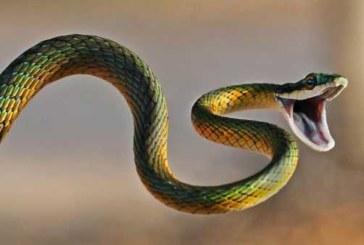 Змея вылезла из под капота и напугала водителя в Казахстане (видео)