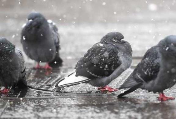 Птицы впали в депрессию из-за московской погоды