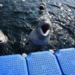 Глава Минприроды назвал сроки освобождения косаток и белух из «китовой тюрьмы»