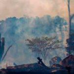 Пожары в Амазонии не угрожают «зеленым легким планеты». И вот почему