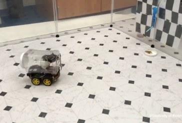 Американские ученые научили крыс водить машины (видео)