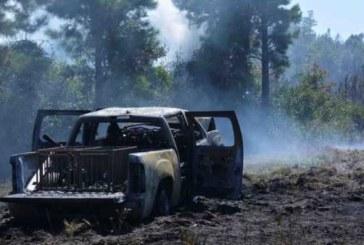В Магадане медведи разорвали три автомобиля (видео)